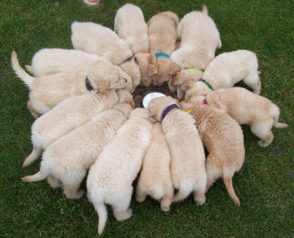 Teamwork - puppies