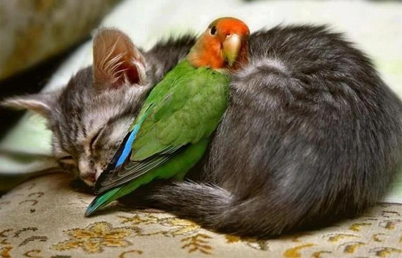 Trust - cat & parrot