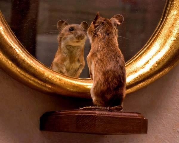 Self-awareness - squirrel