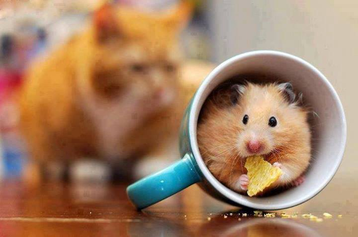 Risk - mouse in mug